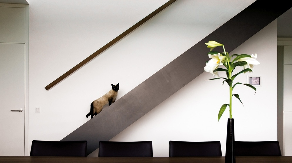 traumh user ein intelligentes haus zweite staffel. Black Bedroom Furniture Sets. Home Design Ideas