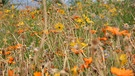 Blumenwiese | Bild: picture-alliance/dpa