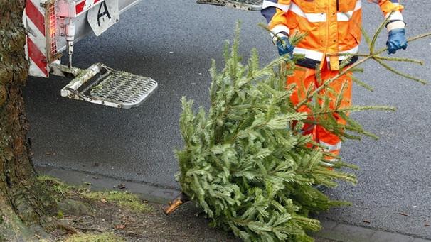 weihnachtsbaum entsorgen diese fehler beim entsorgen. Black Bedroom Furniture Sets. Home Design Ideas