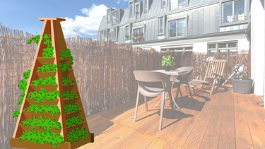 erdbeeren auf dem balkon so f hlen sich ihre erdbeeren im. Black Bedroom Furniture Sets. Home Design Ideas