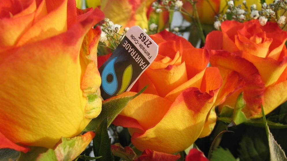 blumen darf ich rosen aus ostafrika kaufen umweltkommissar experten tipps bayern 1. Black Bedroom Furniture Sets. Home Design Ideas