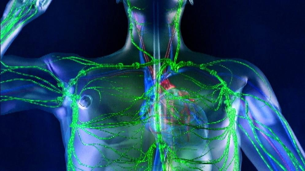 Arbeitsblätter Biologie Immunsystem : Telekolleg biologie folge das immunsystem