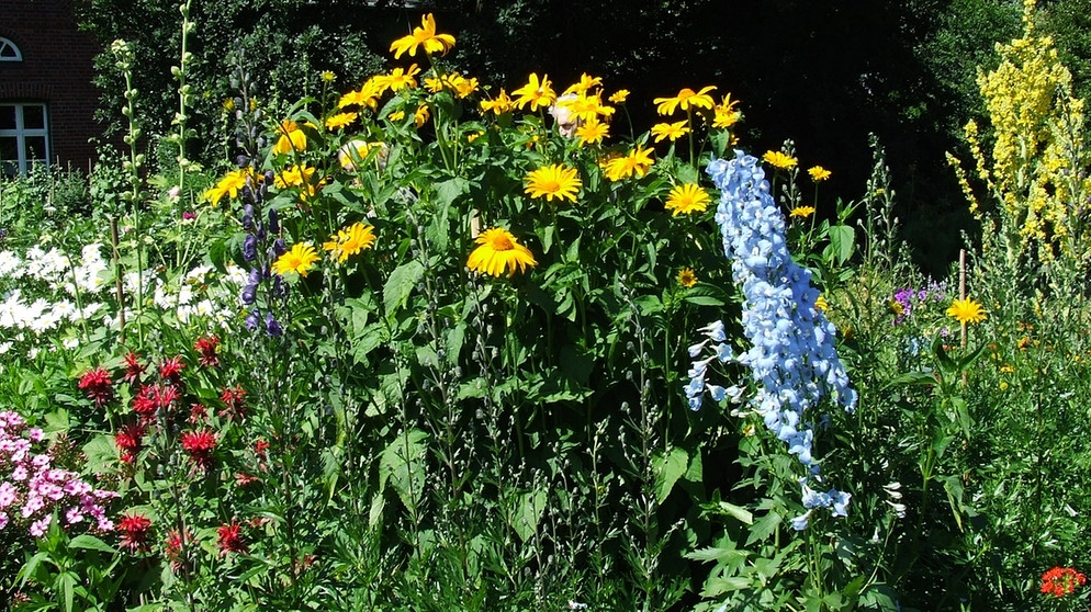 Garten-Einmaleins: Stauden pflanzen und pflegen | Garten ...