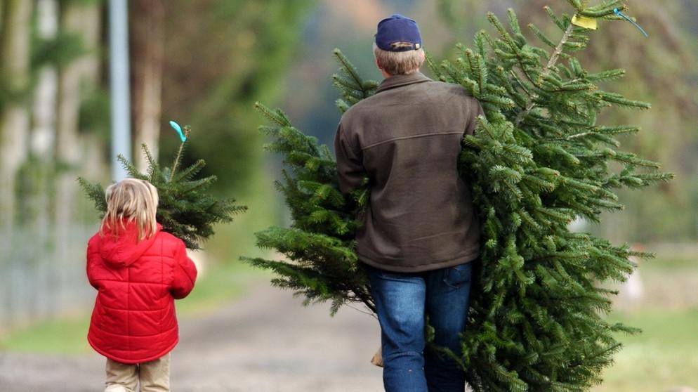 weihnachtsbaum tipps zapfen weihnachtsbaumschmuck