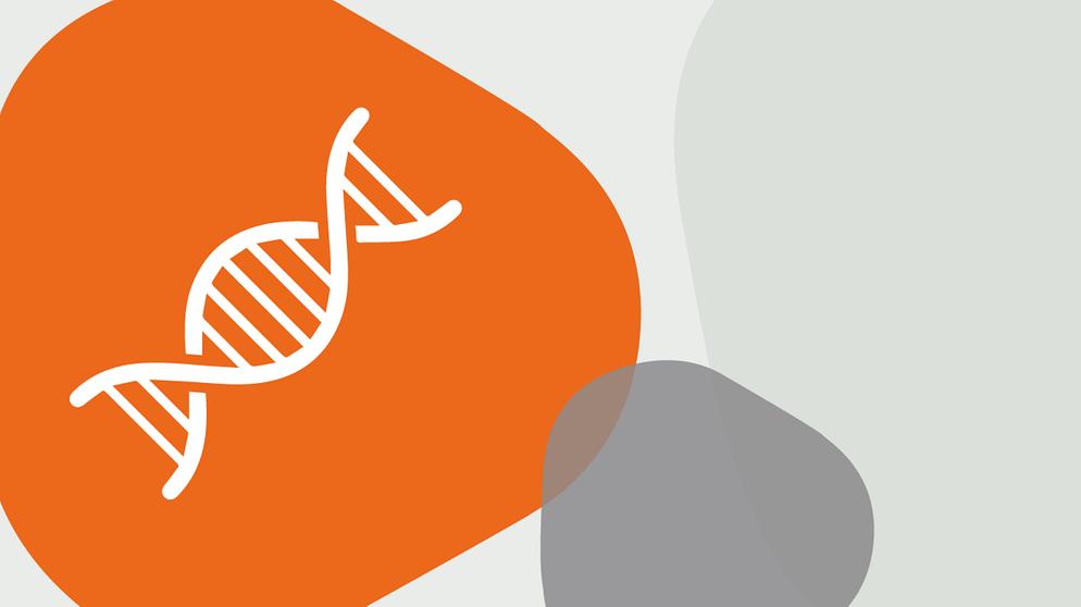 Verdauung: Dünndarmwand - Übungen | Biologie | alpha Lernen | BR.de