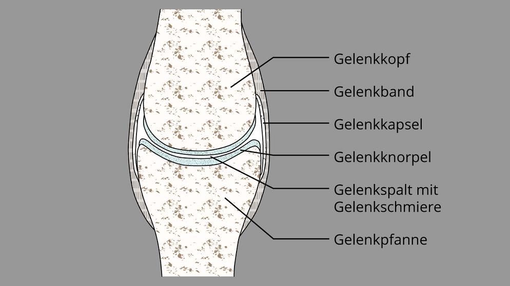 Haltung und Bewegung 1: Funktion und Aufbau der Gelenke | Biologie ...