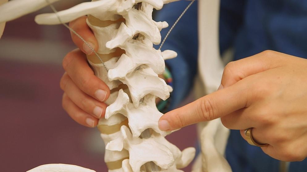 Haltung und Bewegung 1: Warum das Skelett so wichtig ist | Biologie ...