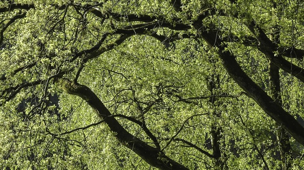 Lebensgemeinschaft Wald (2): Nahrungsbeziehungen und Stoffkreisläufe ...
