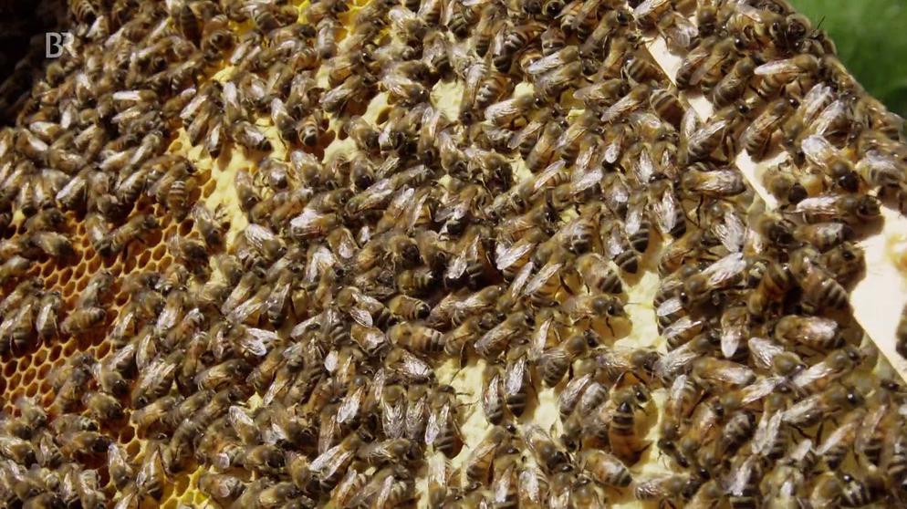 Dokthema Gift Im Honig Tote Bienen Rumänische Imker Schlagen Alarm