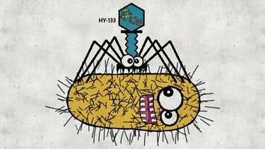 Illustration: Phage (Virus-Art) greift einen MRSA-Keim (Bakterium) an. | Bild: BR