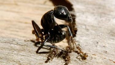 Ameisen Fleissige Arbeiterinnen Und Eiskalte Morder Wissen