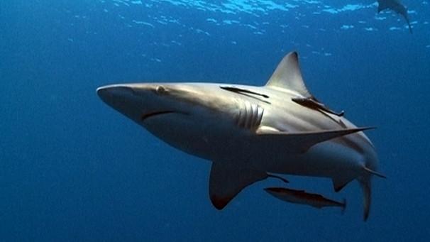 die welt der haie stream