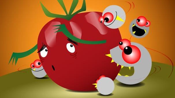 Klettergerüst Tomate : Bayerns schönste tomate die aktion in der chronik wir