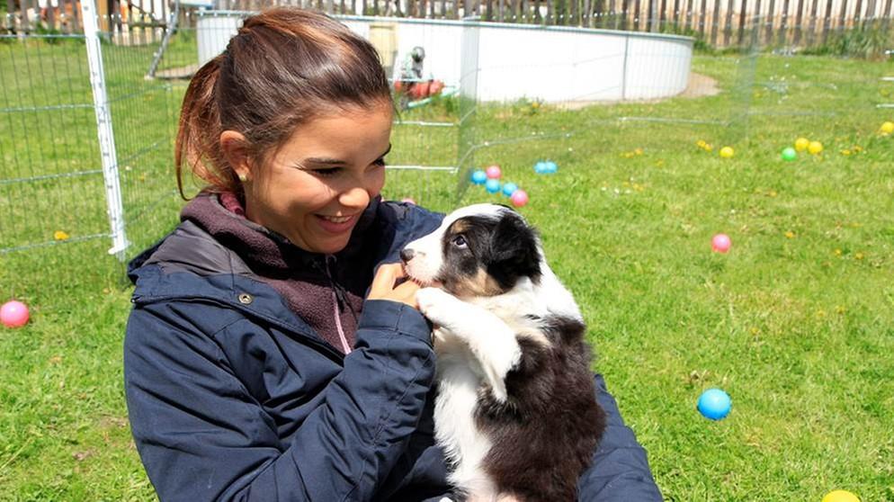 Anna Und Die Haustiere Border Collie Anna Und Die Haustiere Schauen Br Kinder Eure Startseite