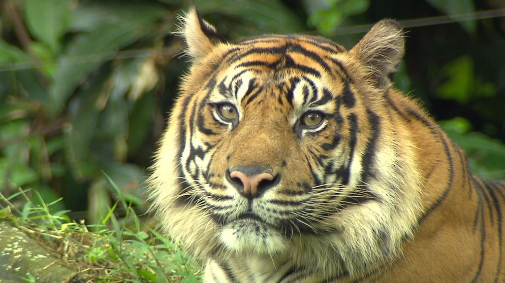 Anna Und Die Wilden Tiere Im Revier Der Tiger Paula Anna Und Die Wilden Tiere Schauen Br Kinder Eure Startseite