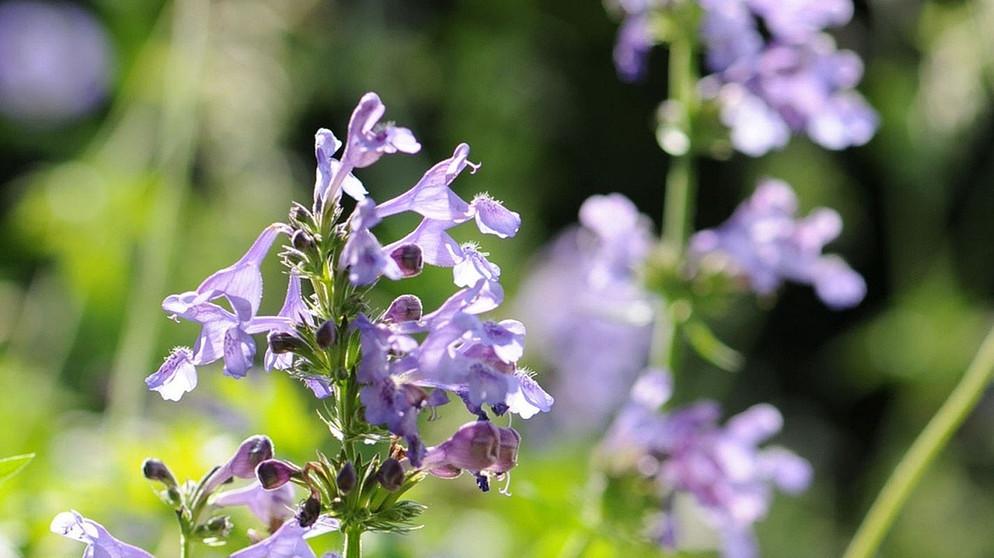 Welche Pflanzen Mogen Bienen Tipps Fur Bienenweiden Und Co