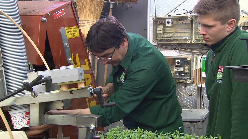 Gärtner In Der Fachrichtung Zierpflanzenbau Die Mit Dem Grünen