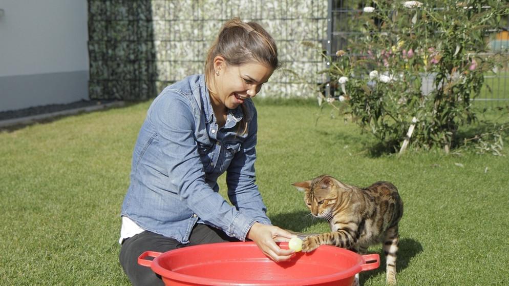 Anna Und Die Haustiere Bengalkatze Anna Und Die Haustiere Schauen Br Kinder Eure Startseite