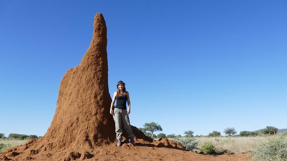 anna und die wilden tiere im reich der termiten paula. Black Bedroom Furniture Sets. Home Design Ideas