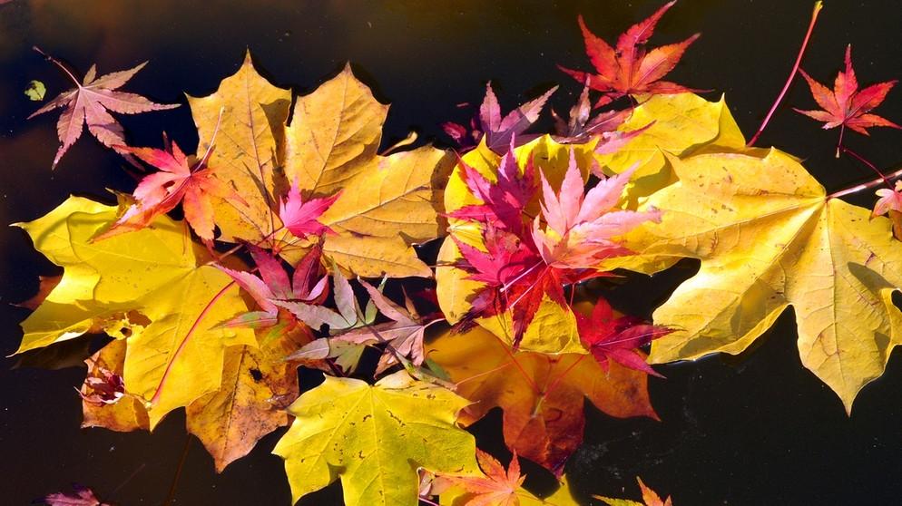 Keine graue Jahreszeit: Bunter, stürmischer, dunkler Herbst