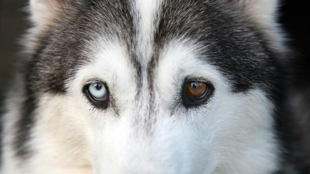 Augen mit blauen dunkelhäutige menschen Blaue Augen