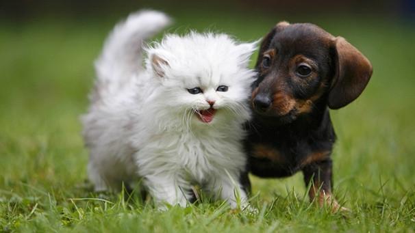 Wie Hund Und Katz Können Hunde Und Katzen Freunde Werden Br