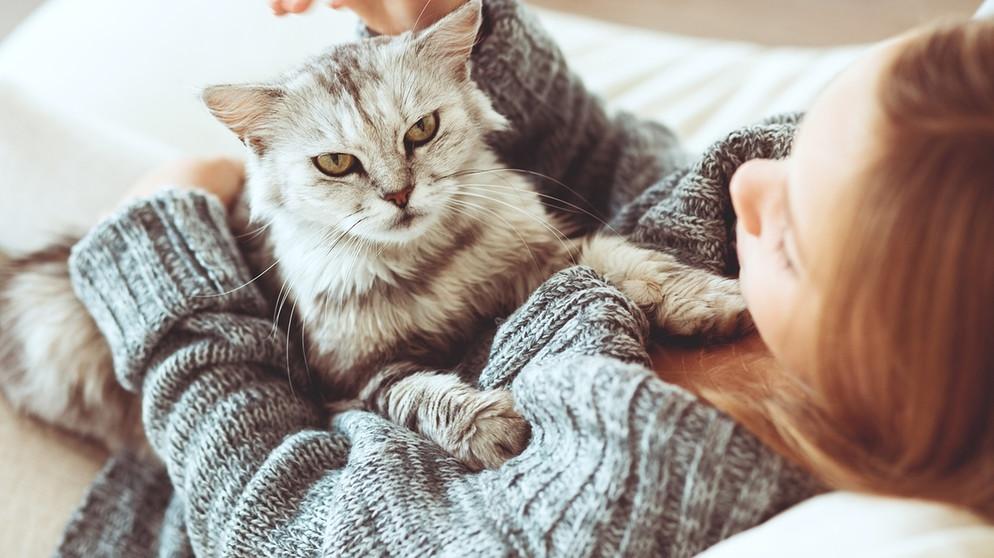 2de8219191b Katzengeschichte: Von der Wildkatze zur Hauskatze   BR Kinder - eure ...
