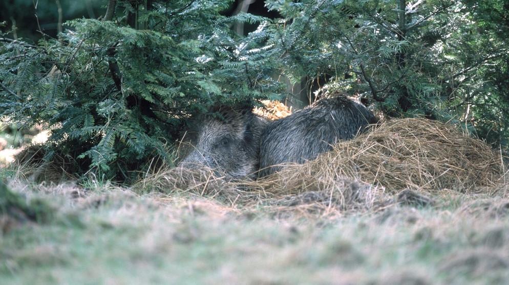 Wie Tiere Sich Betten Einblicke In Tierische Schlafzimmer Br