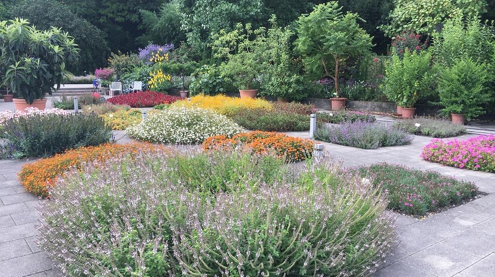 augsburgs gr ne oase 80 jahre botanischer garten schwaben nachrichten. Black Bedroom Furniture Sets. Home Design Ideas