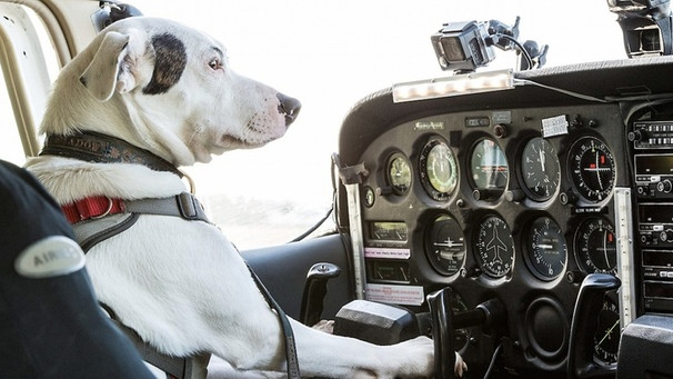 Erster fliegender Hund | Bild: Oxford Scientific Films