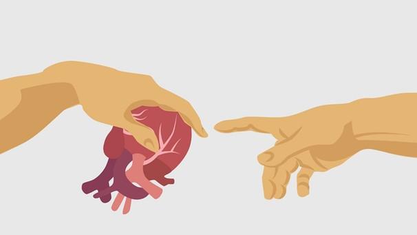 FAQ Organspendeausweis : 8 Dinge, die jeder über Organspende wissen sollte  | Leben | Themen | PULS
