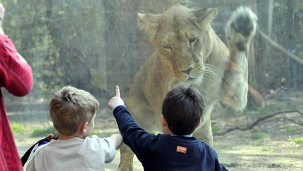 Pro und Contra: Tiere im Zoo: Artenschutz oder Tierquälerei ...