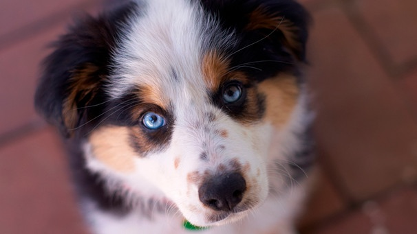 Hund Bester Freund Warum Hunde Unserer Gesundheit Gut Tun
