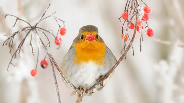 Vogel Futtern Im Winter Welches Vogelfutter Nutzen