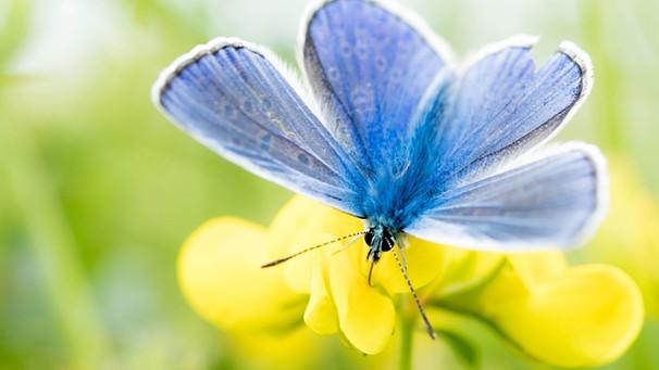 Schmetterlingspflanzen Welche Blumen Schmetterlinge Mögen Bayern