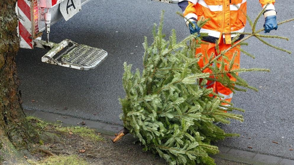 Weihnachtsbaum Engelshaar.Weihnachtsbaum Entsorgen Wie Entsorge Ich Meinen Christbaum
