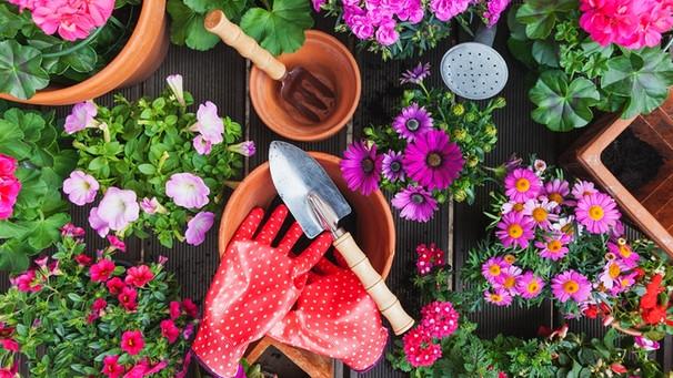 lavendel lässt kopf hängen