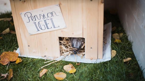 Igel überwintern Helfen Das Perfekte Igelhaus Für Den Winterschlaf
