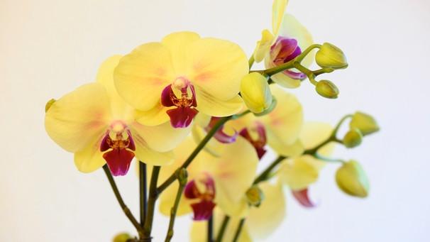 Pflanzenfragen Zimmerpflanzen Pflanzentipps Experten Tipps