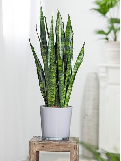 Luftreinigende Pflanzen: Diese Pflanzen verbessern das ...