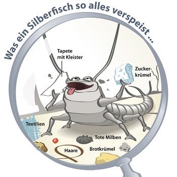 Silberfische Bek 228 Mpfen Warum Silberfische Im Bad Ein