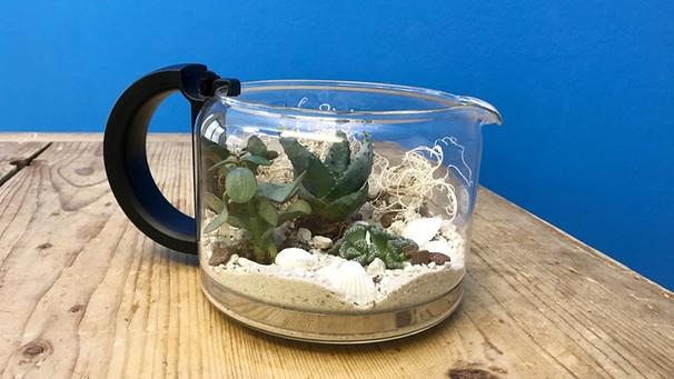 Terrarium Diy Mini Terrarium Aus Alter Kaffeekanne Basteln