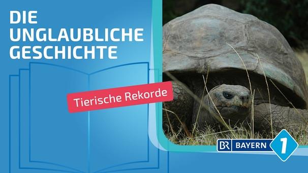 Wie Alt Werden Schildkröten Die ältesten Tiere Der Welt Bayern 1