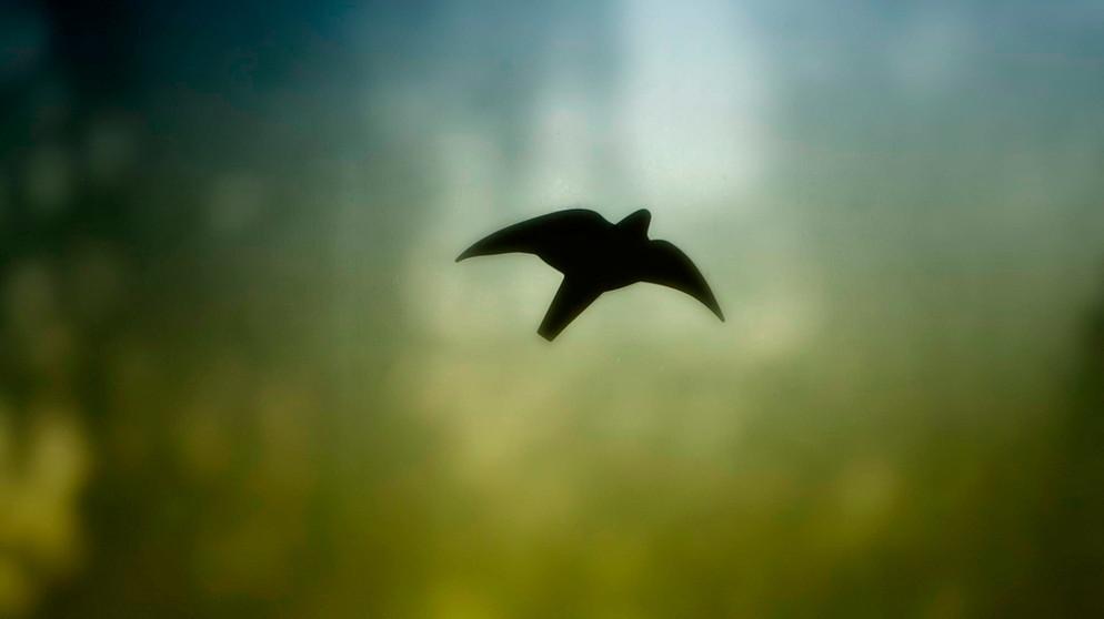 Vogelschlag So Verhindern Sie Dass Vögel Gegen Ihre