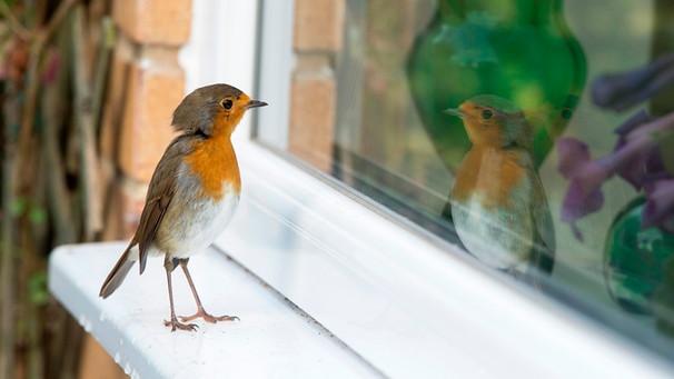 Vogelschlag: So verhindern Sie, dass Vögel gegen Ihre ...