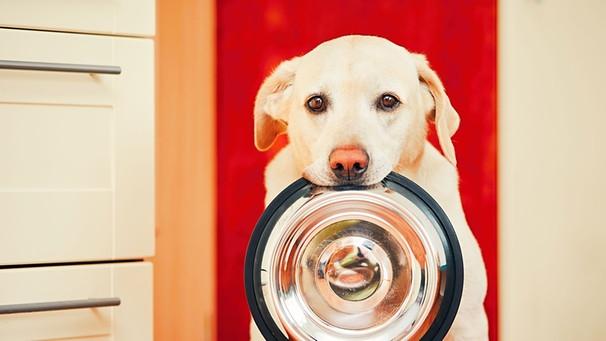 was d rfen hunde nicht fressen diese lebensmittel sind giftig f r hunde bayern 1 radio. Black Bedroom Furniture Sets. Home Design Ideas