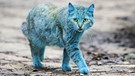 Streunende Katze | Bild: picture-alliance/dpa/ZUMA Press/Petar Petrov