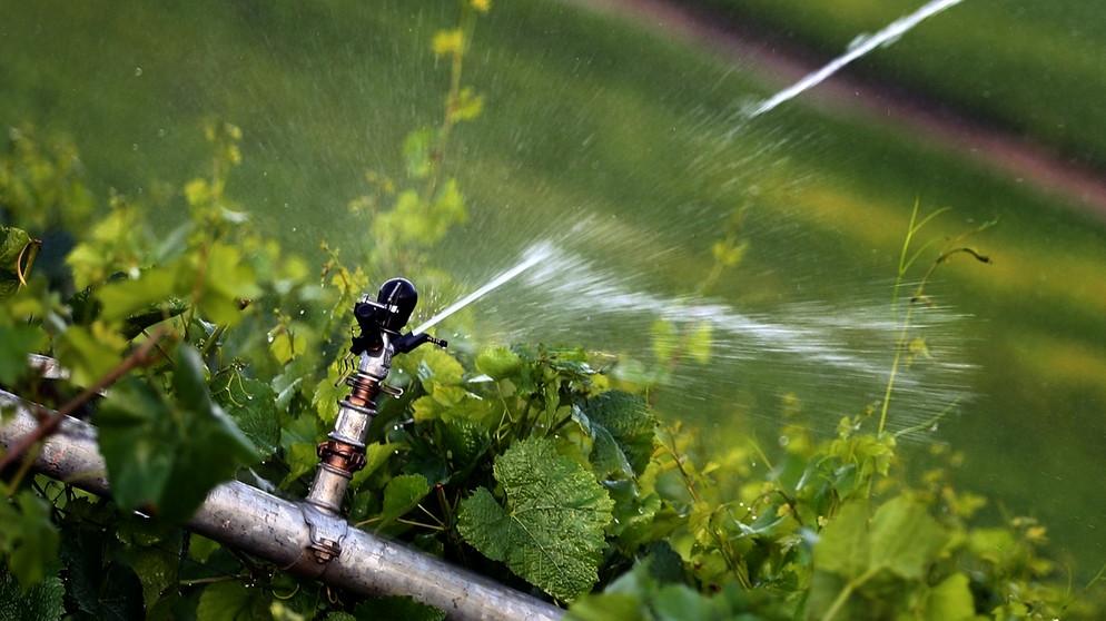 Nachhaltigkeit-Bayerischer-Klimapreis-f-r-Fr-nkischen-Weinbau