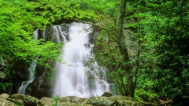 Wasserfall im Great Smoky Mountains National Park in Tennessee | Bild: picture alliance / united archives