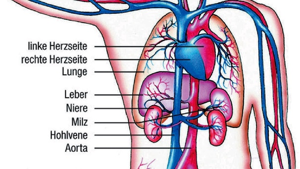 Arteriosklerose usw verkalken der blutgef e themen for Welche poolfolie 0 6 oder 0 8